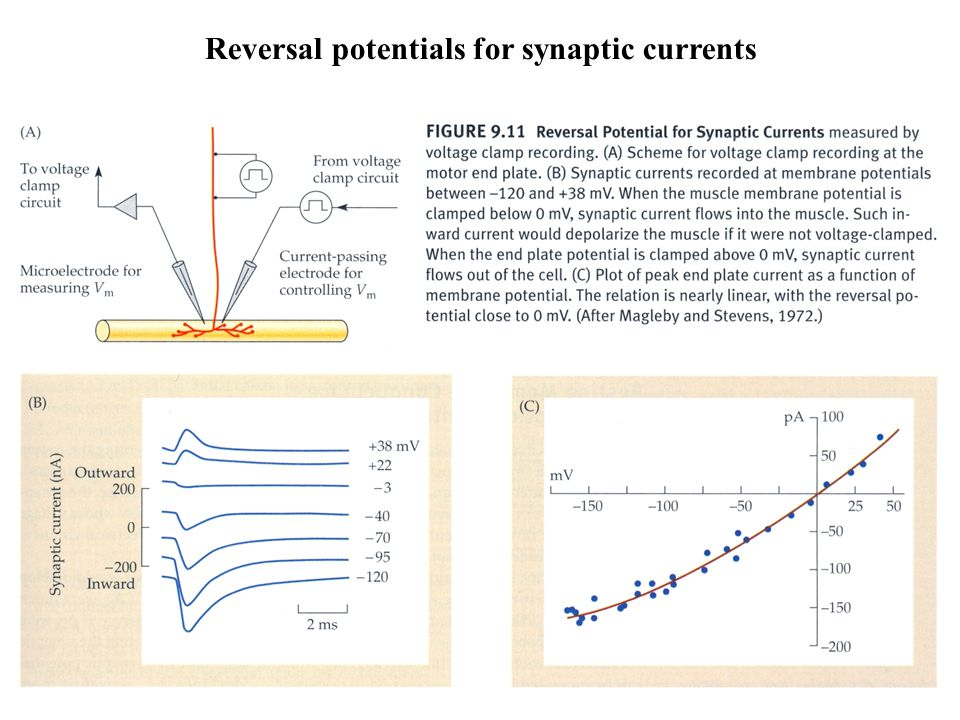 Reversal potentials for synaptic currents