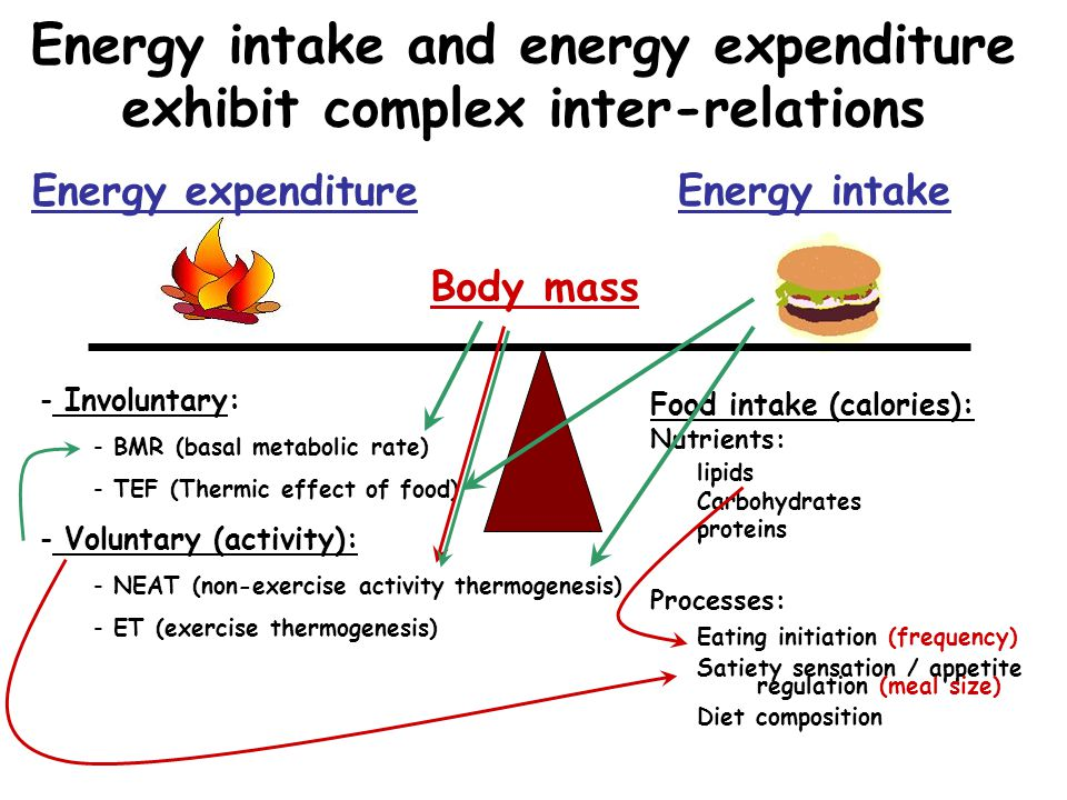 Energy intake and energy expenditure exhibit complex inter-relations