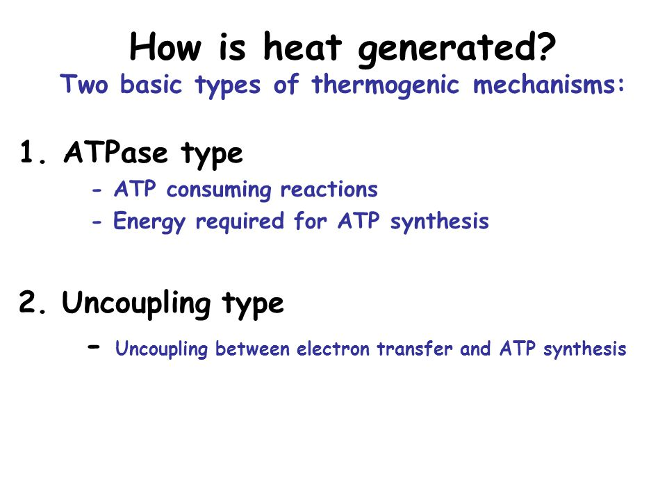 How is heat generated Two basic types of thermogenic mechanisms: