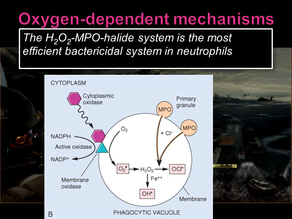 Oxygen-dependent mechanisms
