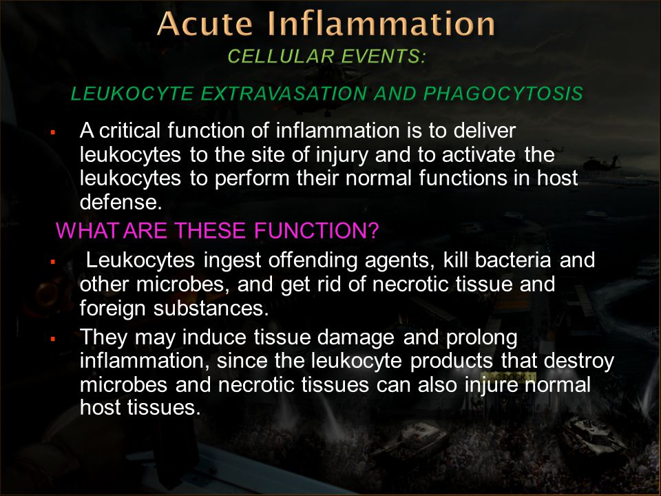 Acute Inflammation CELLULAR EVENTS: LEUKOCYTE EXTRAVASATION AND PHAGOCYTOSIS