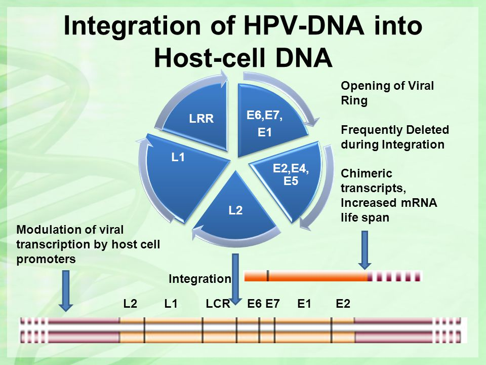 Integration of HPV-DNA into Host-cell DNA