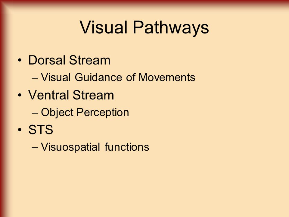 Visual Pathways Dorsal Stream Ventral Stream STS