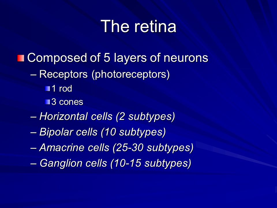 The retina Composed of 5 layers of neurons Receptors (photoreceptors)