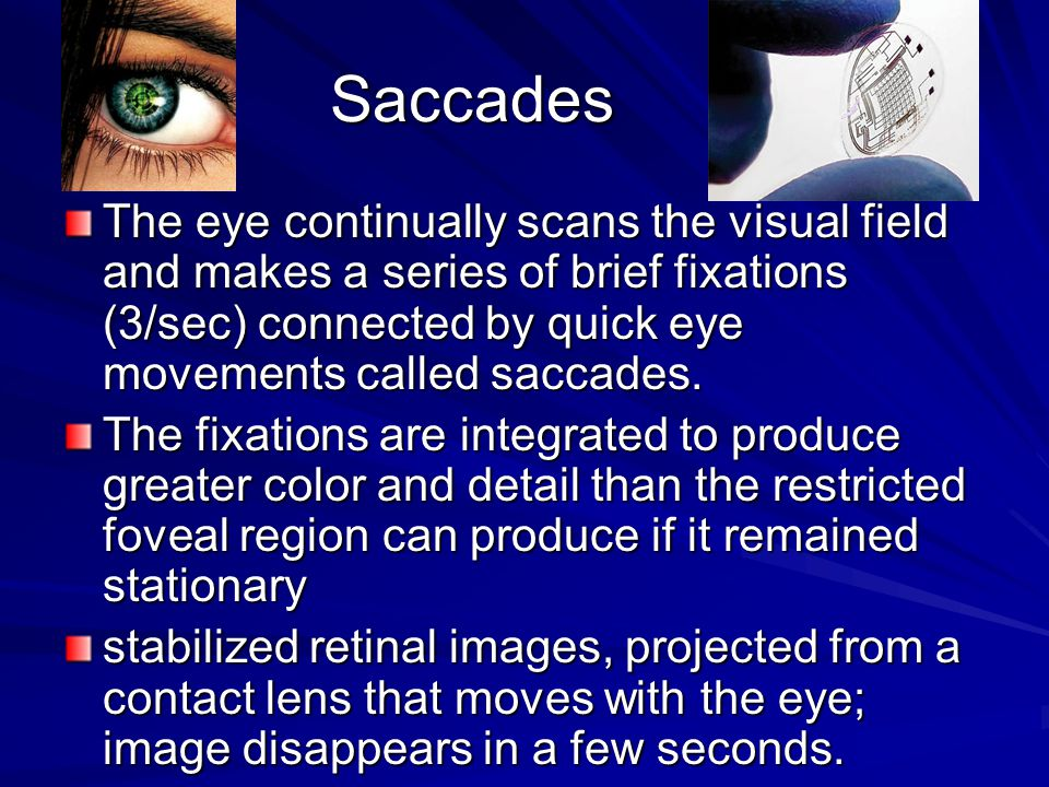 Saccades The eye continually scans the visual field and makes a series of brief fixations (3/sec) connected by quick eye movements called saccades.