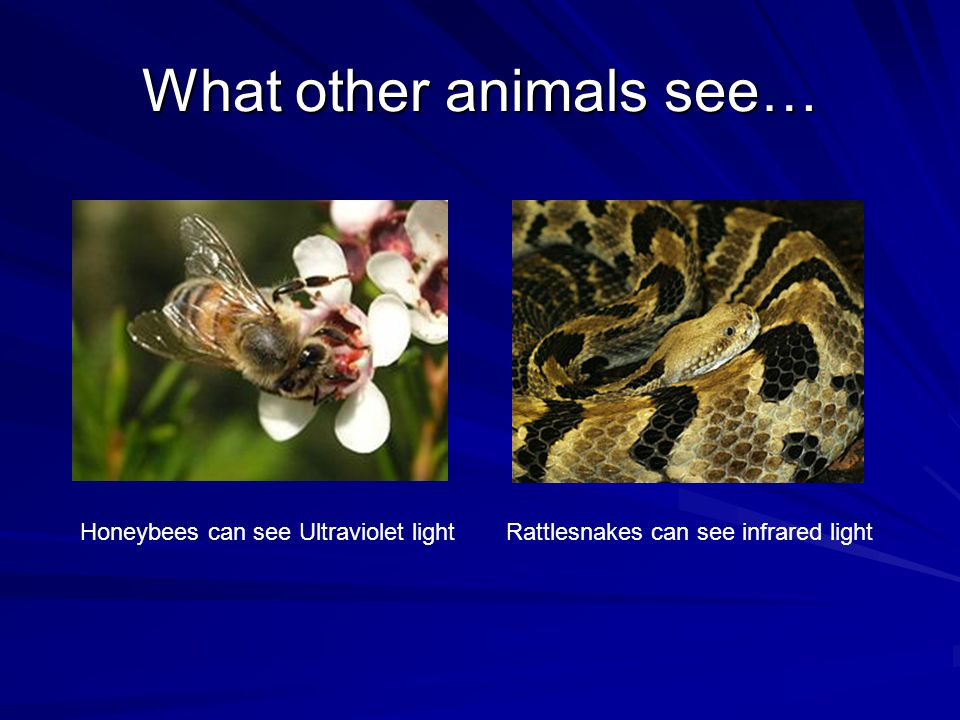 What other animals see…