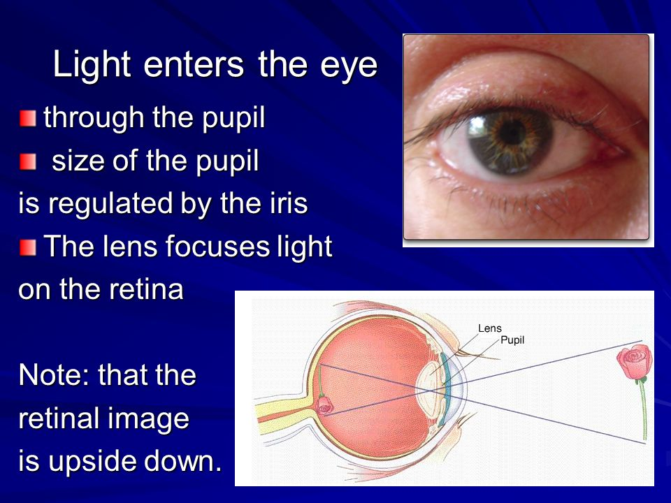 Light enters the eye through the pupil size of the pupil