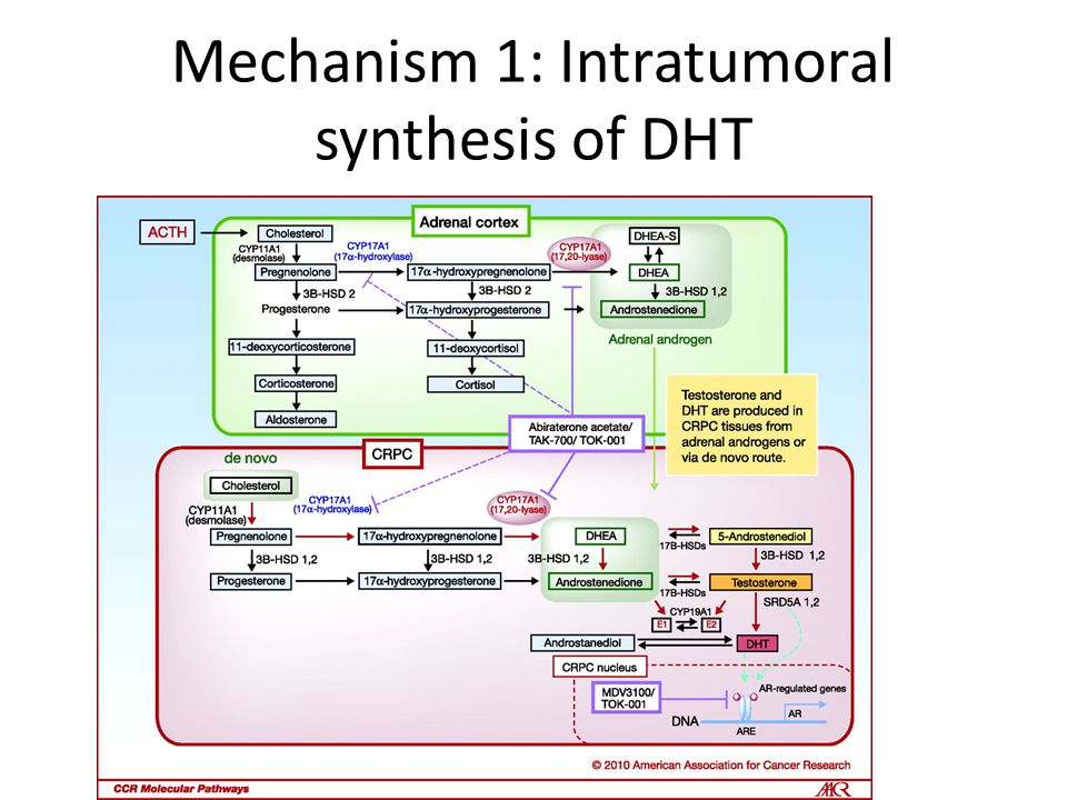Mechanism 1: Intratumoral synthesis of DHT