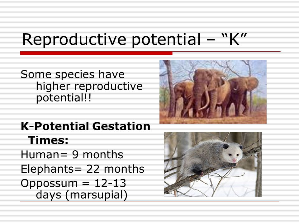 Reproductive potential – K