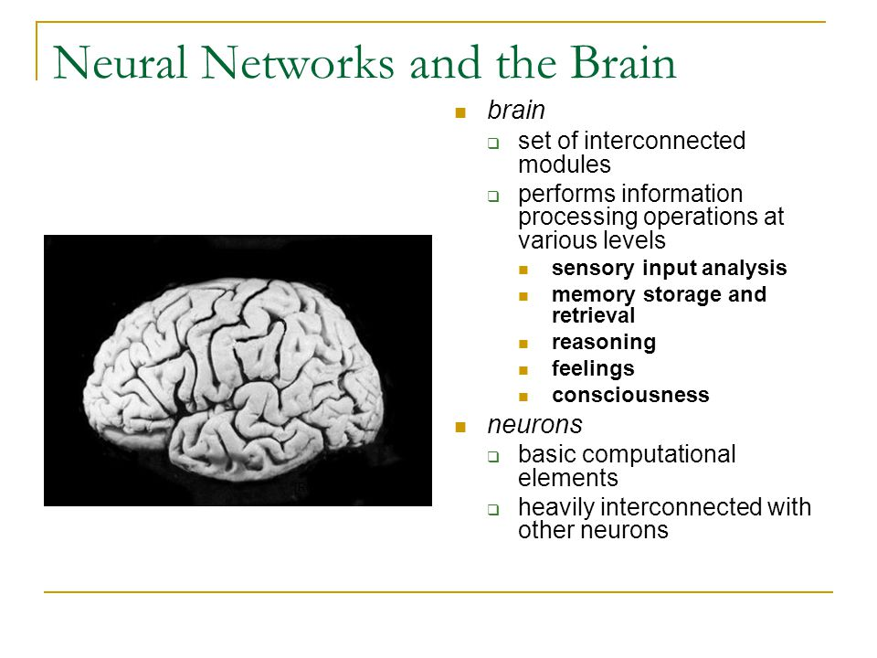 Neural Networks and the Brain