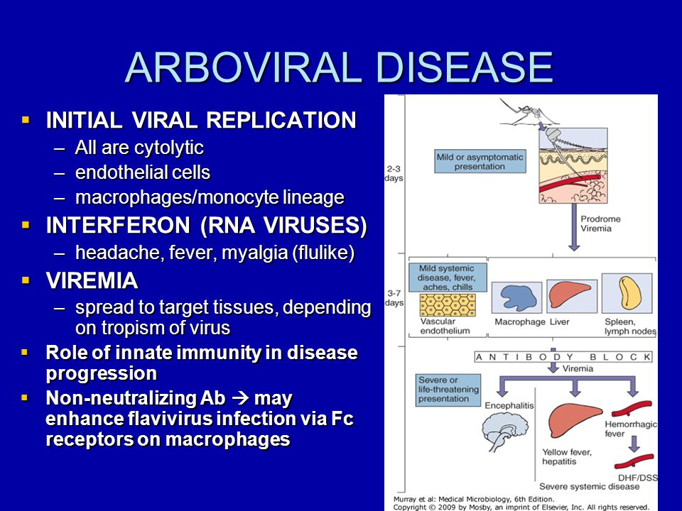 ARBOVIRAL DISEASE INITIAL VIRAL REPLICATION INTERFERON (RNA VIRUSES)