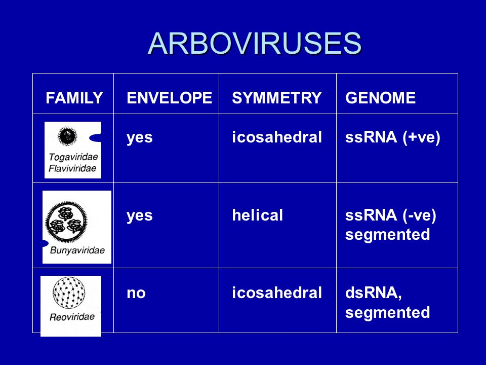 ARBOVIRUSES FAMILY ENVELOPE yes no SYMMETRY icosahedral helical GENOME