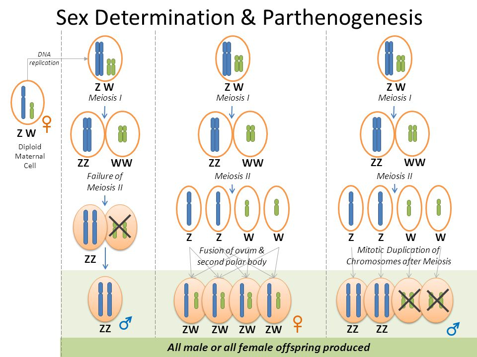 Robin Wright Primer on Parthenogenesis & some other