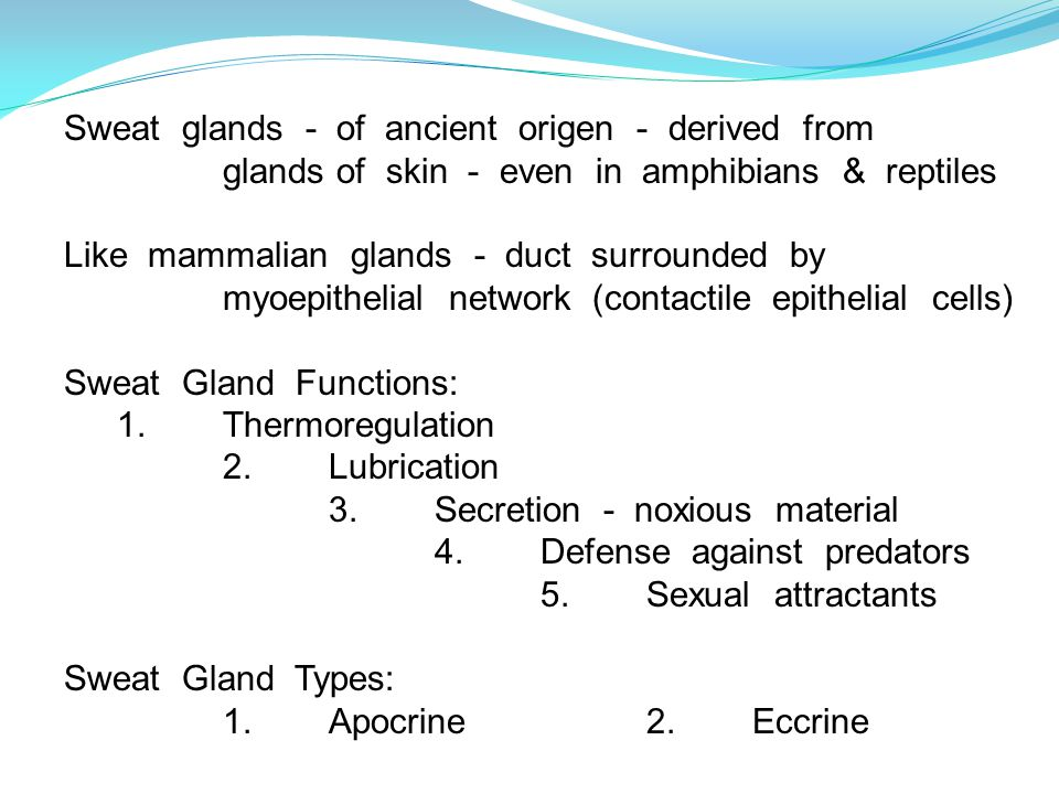 Sweat glands - of ancient origen - derived from