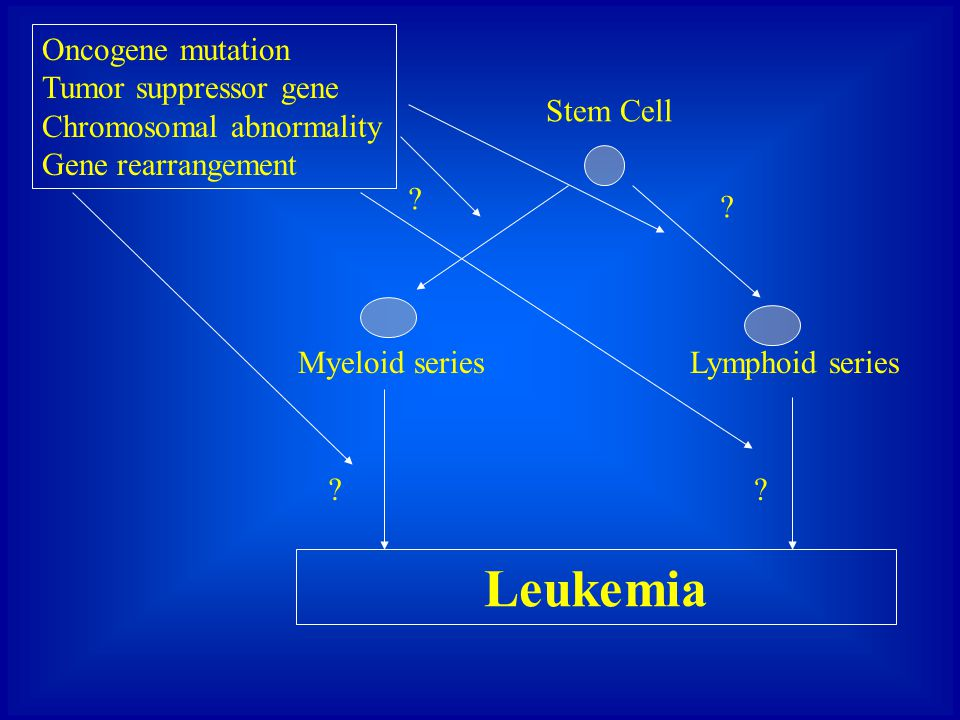 Leukemia Oncogene mutation Tumor suppressor gene