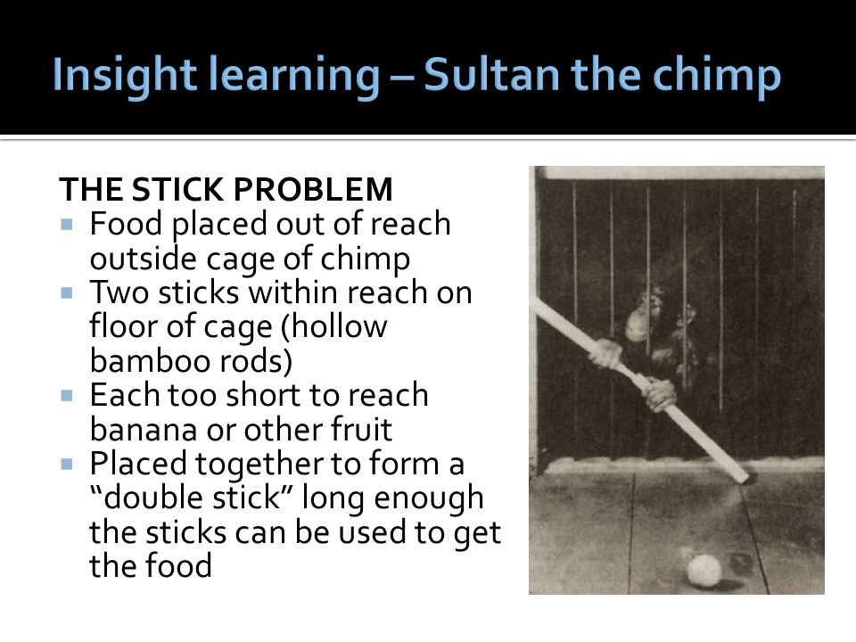 Insight learning – Sultan the chimp