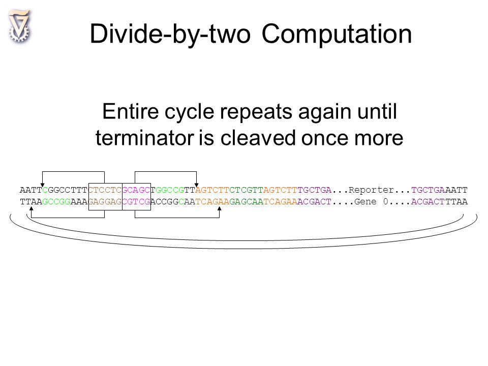 Divide-by-two Computation