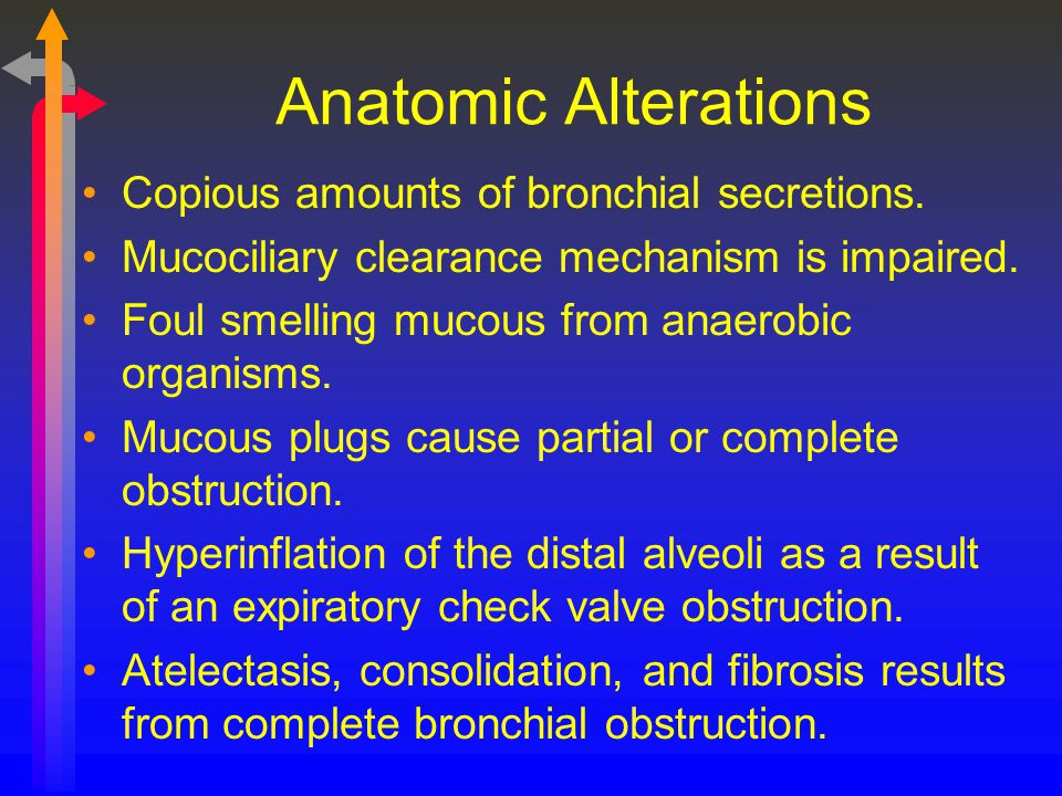 Anatomic Alterations Copious amounts of bronchial secretions.