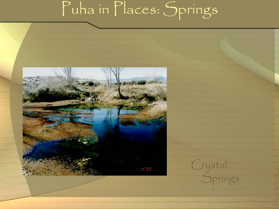Puha in Places: Springs