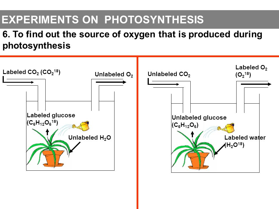Photosynthesis ppt video online download experiments on photosynthesis ccuart Gallery