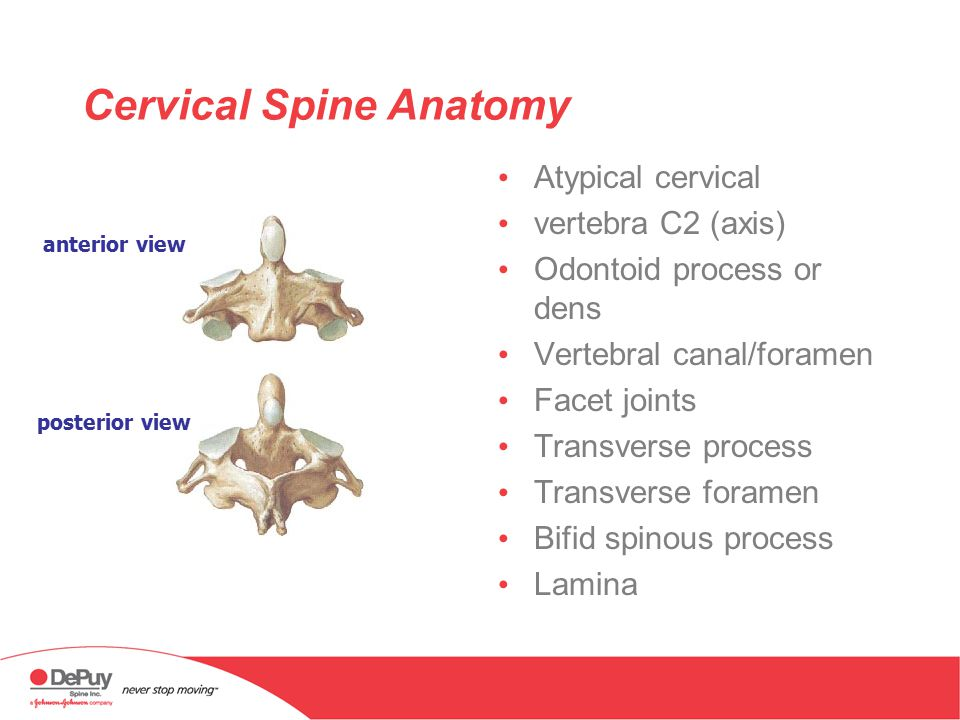 Anatomy Of The Cervical Spine Ppt Download