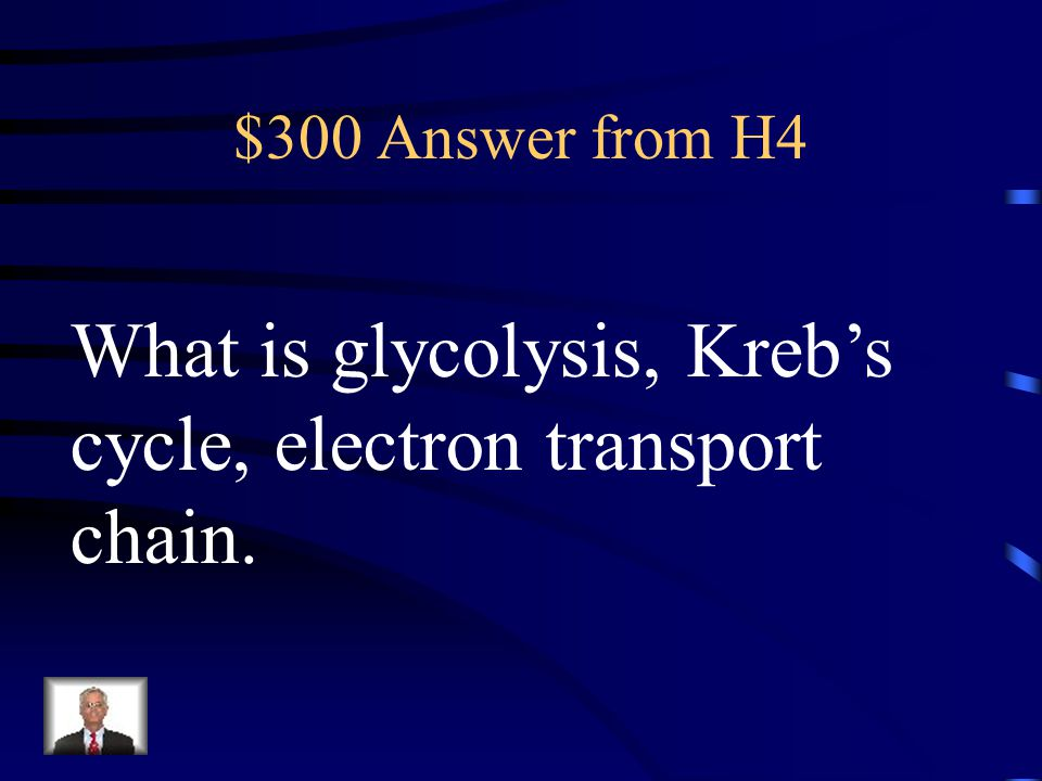 What is glycolysis, Kreb's cycle, electron transport chain.