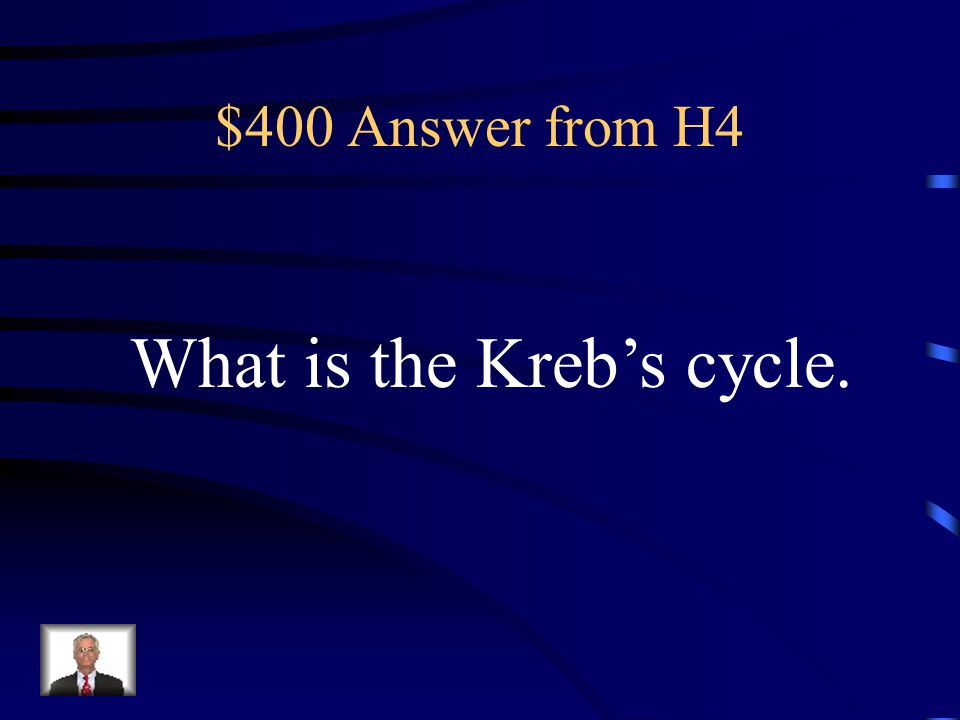 What is the Kreb's cycle.