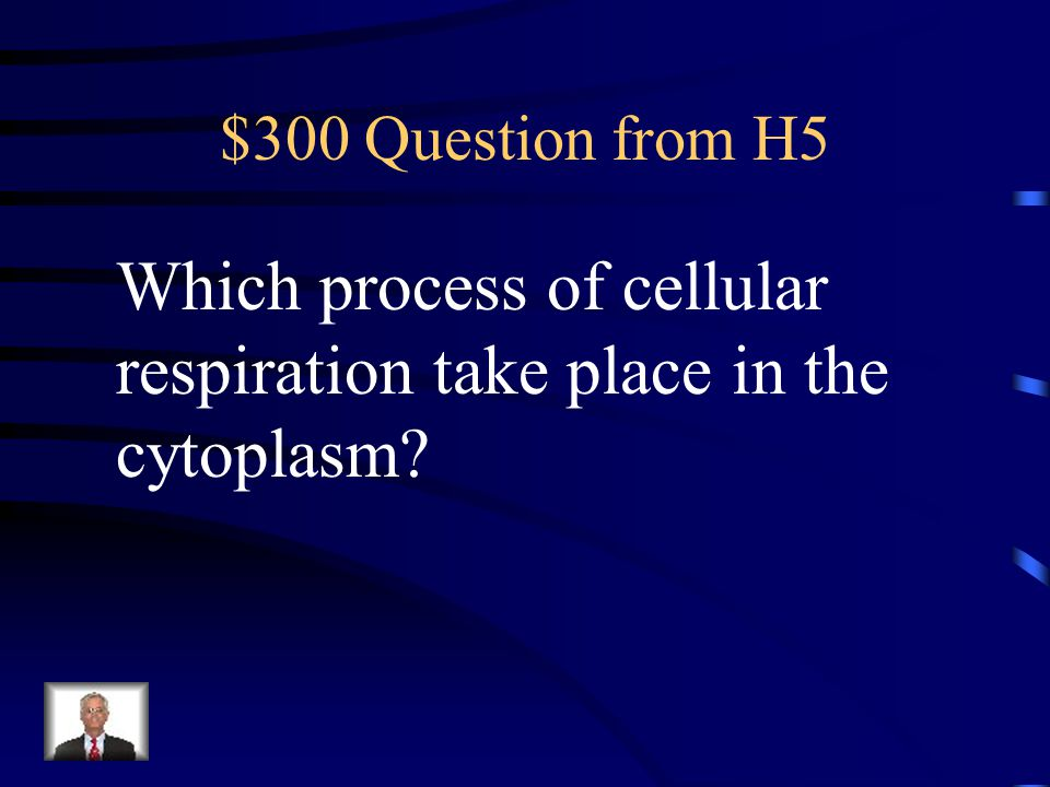 Which process of cellular respiration take place in the cytoplasm
