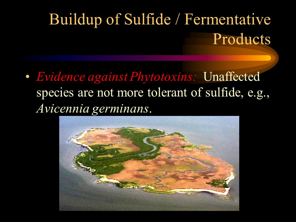 Buildup of Sulfide / Fermentative Products
