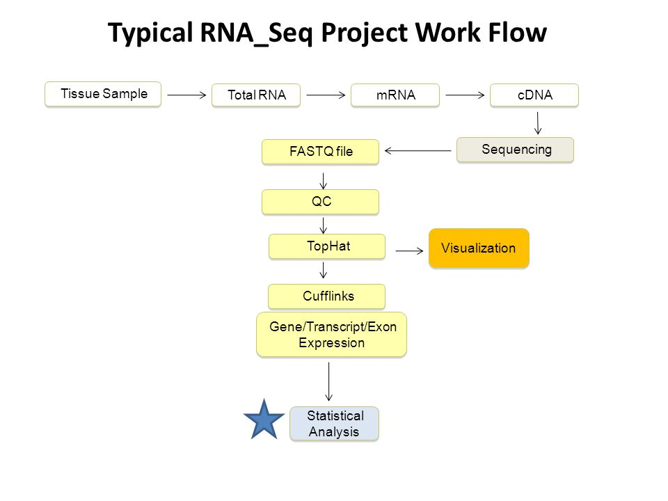 Typical RNA_Seq Project Work Flow