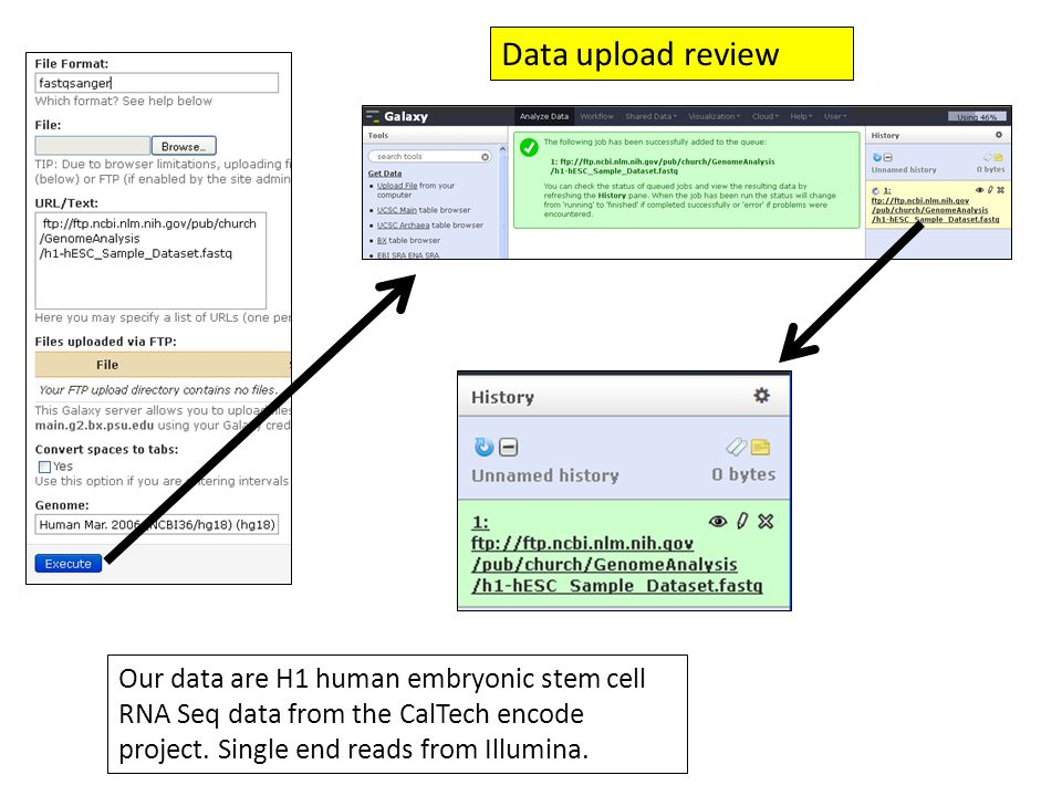 Data upload review Our data are H1 human embryonic stem cell RNA Seq data from the CalTech encode project.