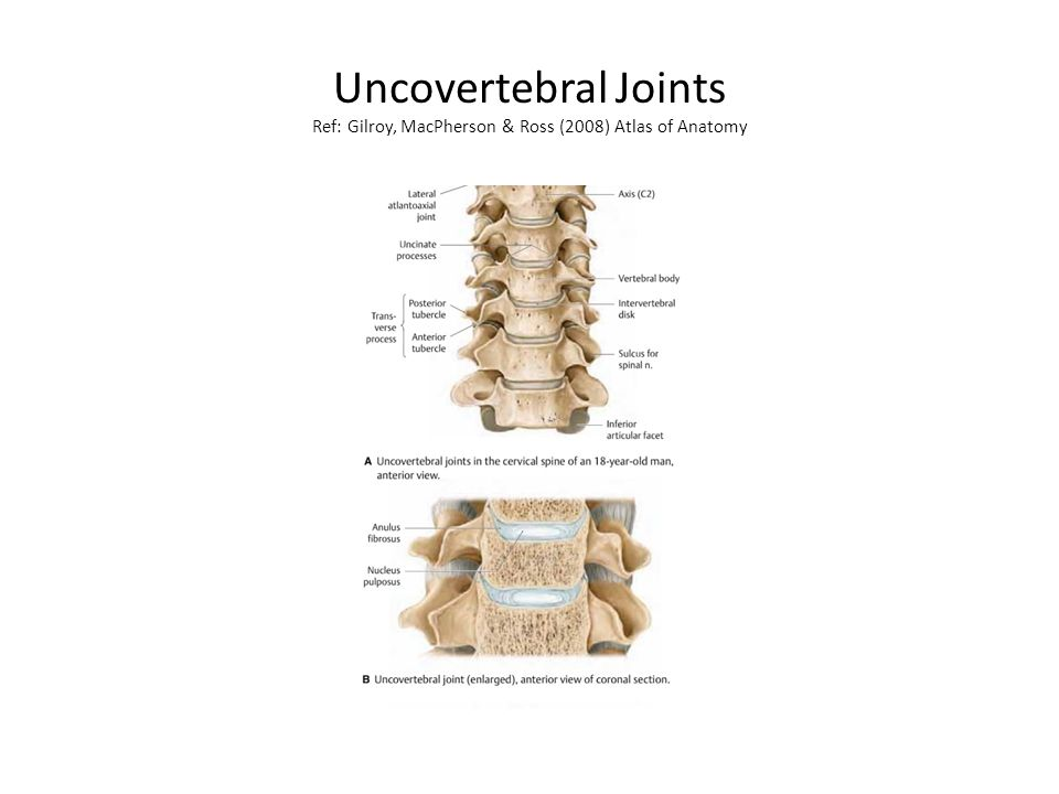 Bones And Joints Of The Neck Ppt Video Online Download