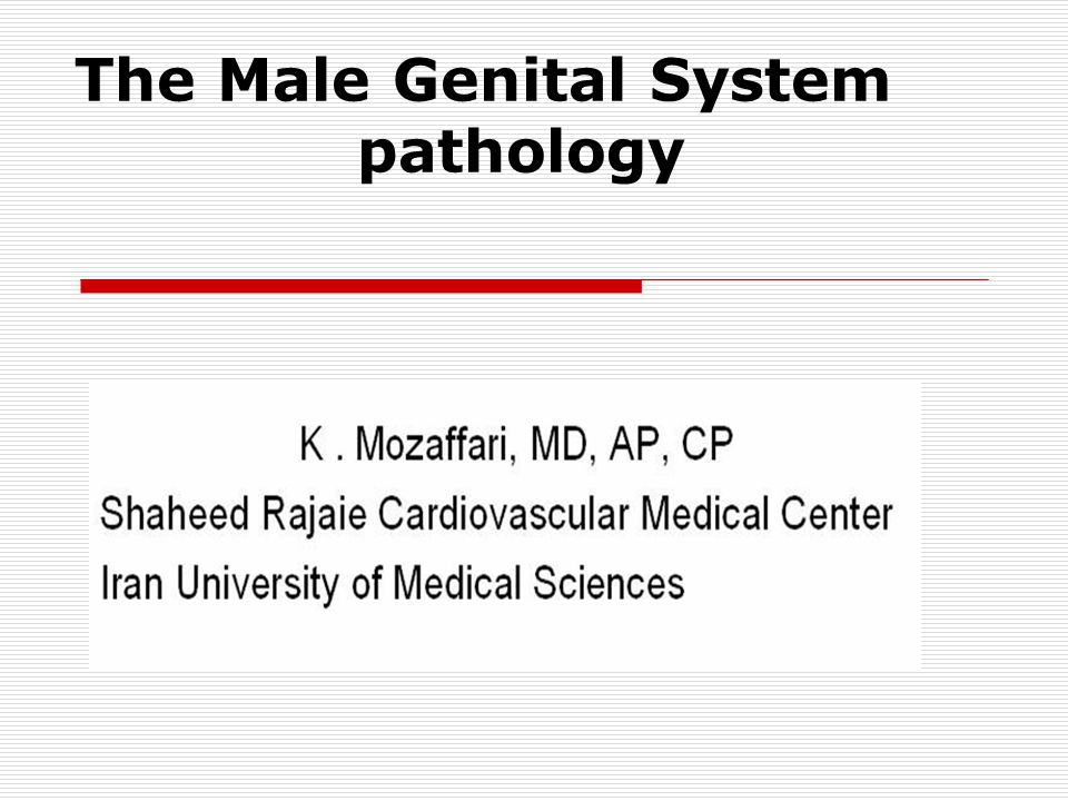 The Male Genital System pathology