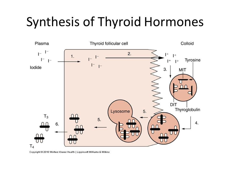 Synthesis of Thyroid Hormones