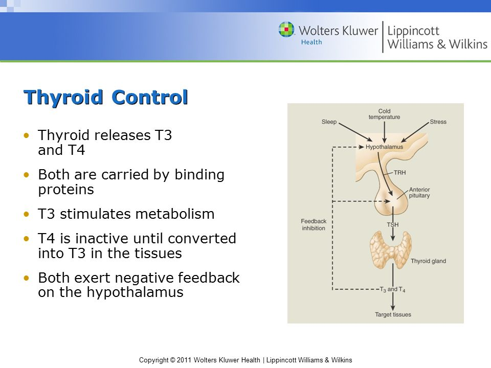 Thyroid Control Thyroid releases T3 and T4