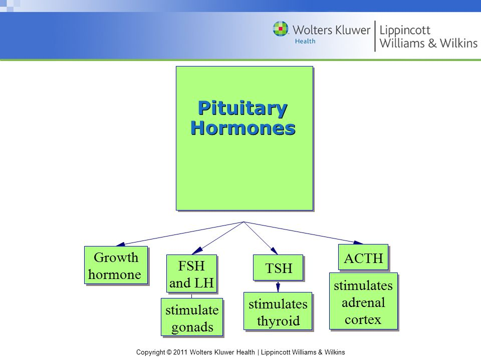 Pituitary Hormones Growth ACTH FSH TSH hormone and LH stimulates