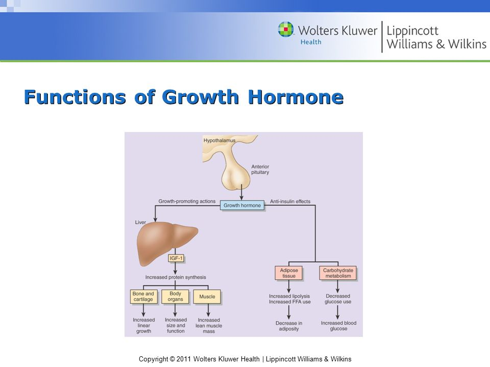 Functions of Growth Hormone