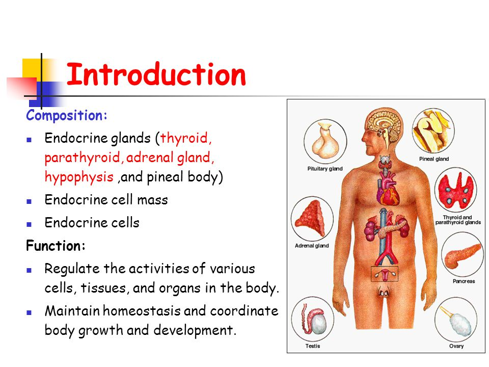 Endocrine System Department Of Histology And Embryology Zhang Xi