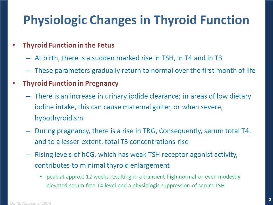 Thyroid Gland Part ppt video online download