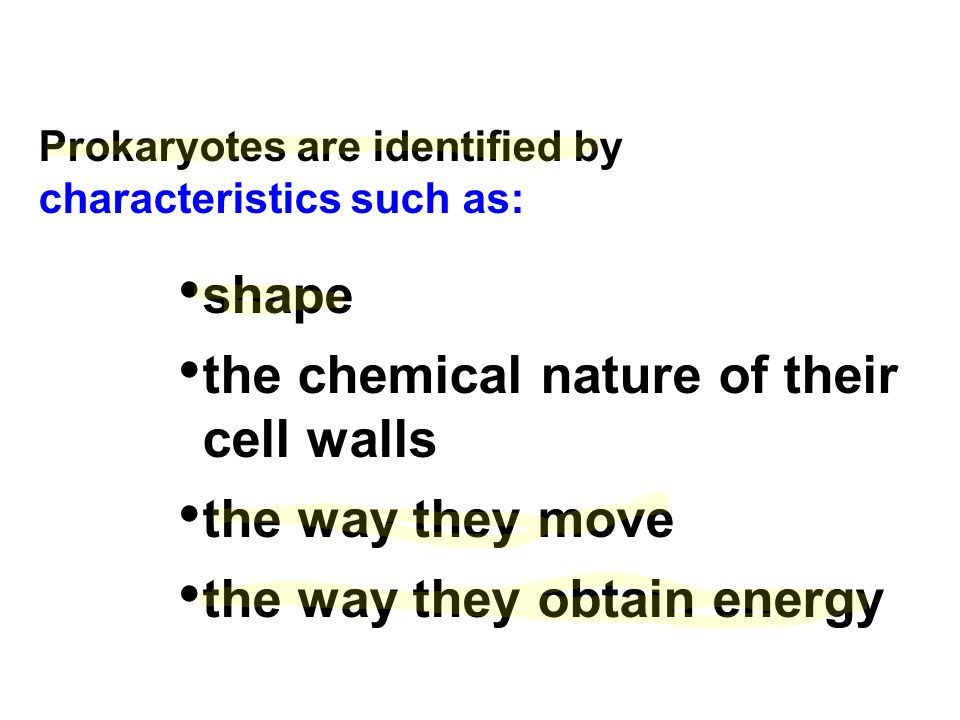 the chemical nature of their cell walls the way they move