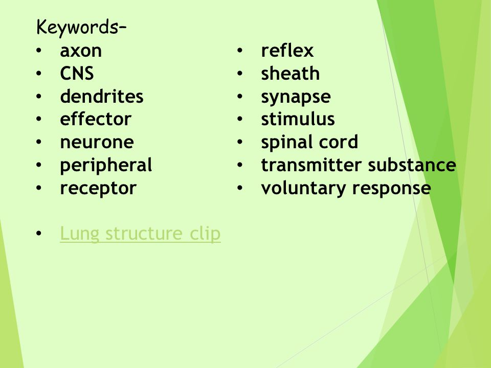 Keywords– axon. CNS. dendrites. effector. neurone. peripheral. receptor. Lung structure clip.