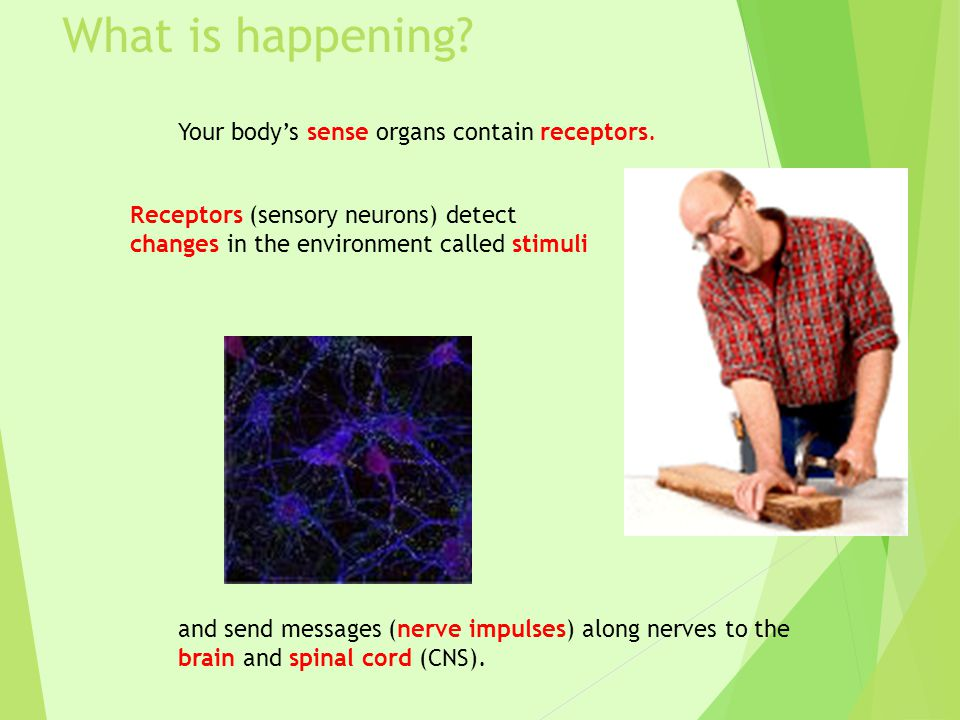 What is happening Your body's sense organs contain receptors.