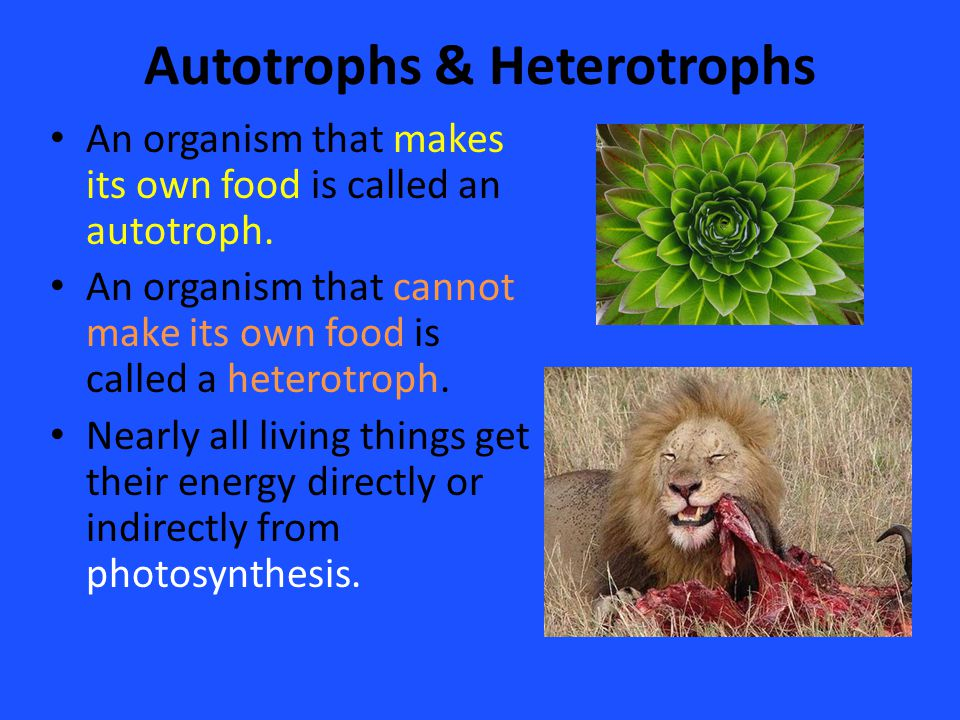 An Organism That Cannot Make Its Own Food Is Called