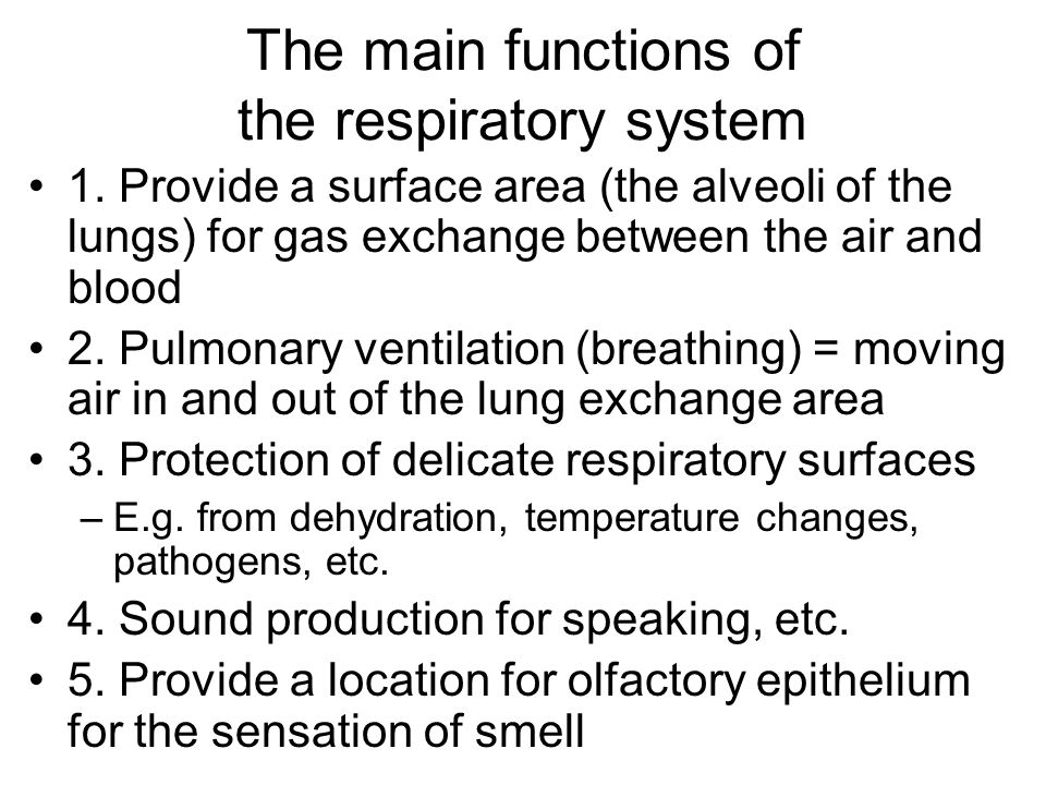 The main functions of the respiratory system