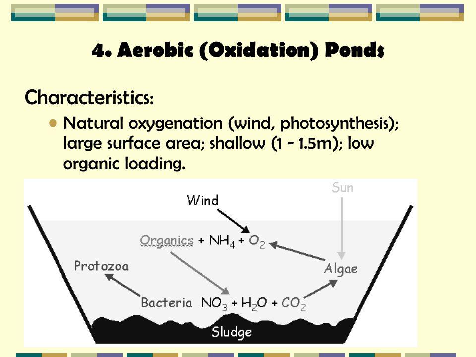 aerobic (oxidation) ponds