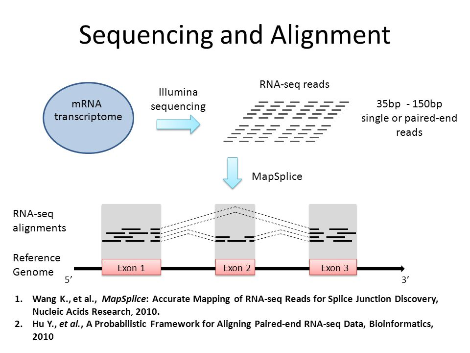 Sequencing and Alignment