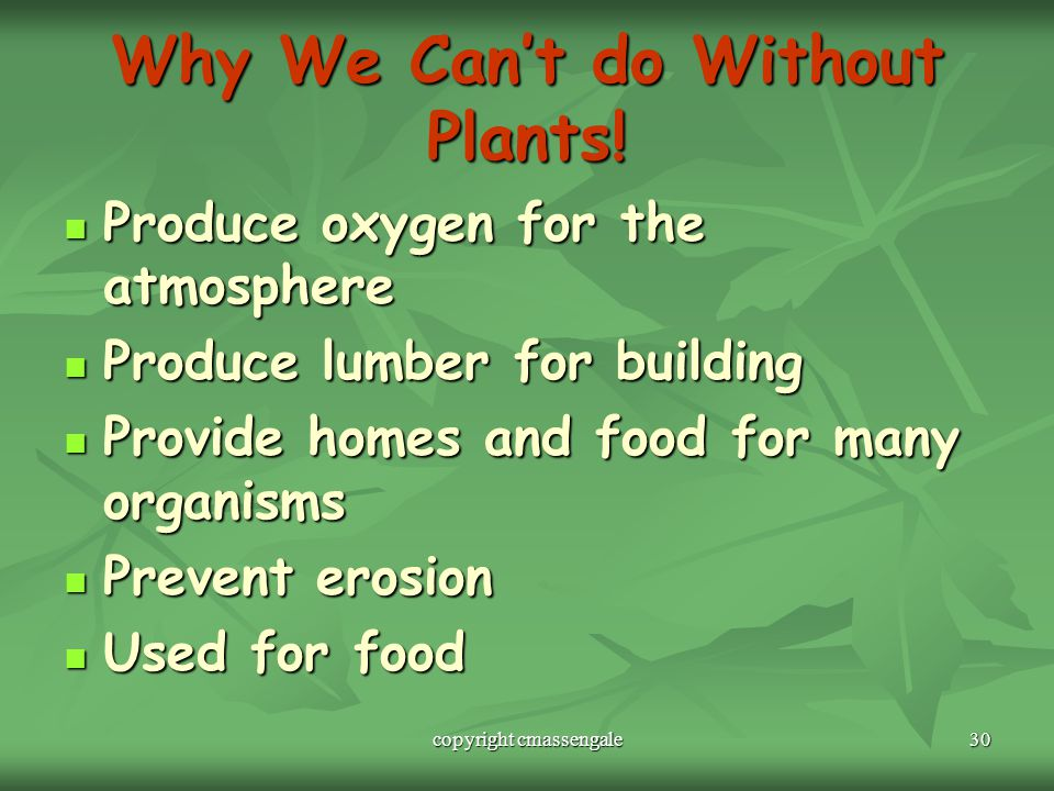 Why We Can't do Without Plants!