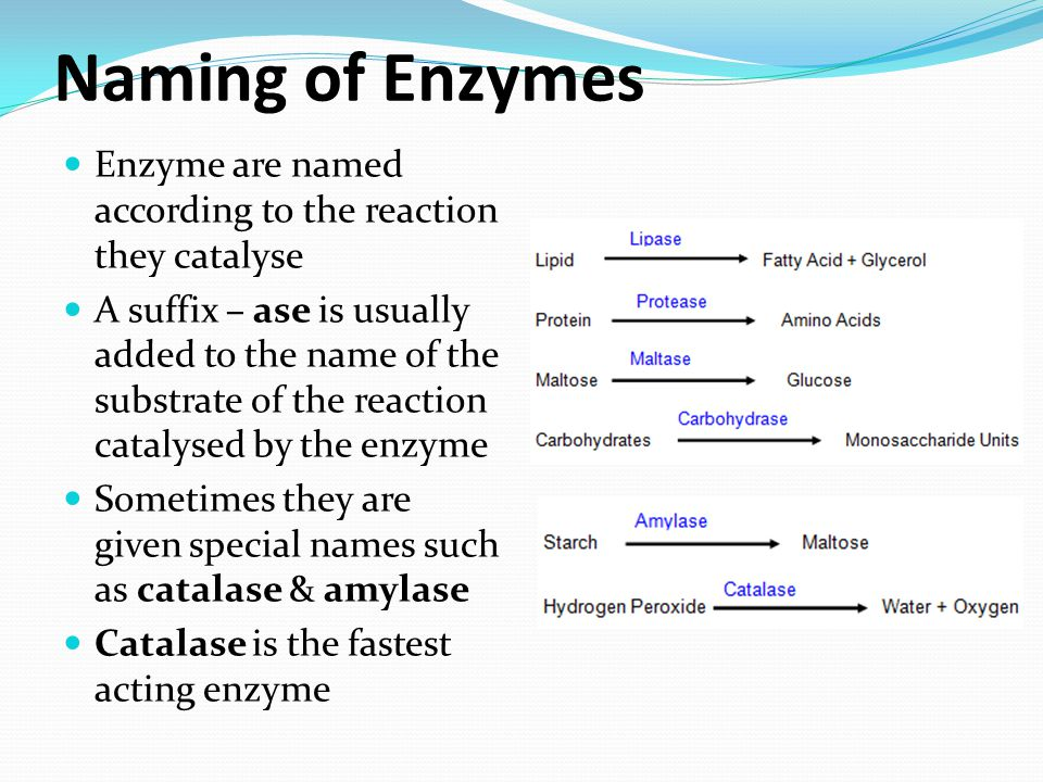 Naming of Enzymes Enzyme are named according to the reaction they catalyse.