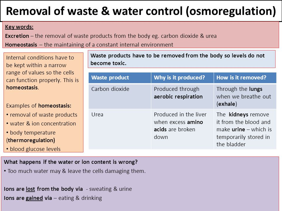 Removal of waste & water control (osmoregulation)