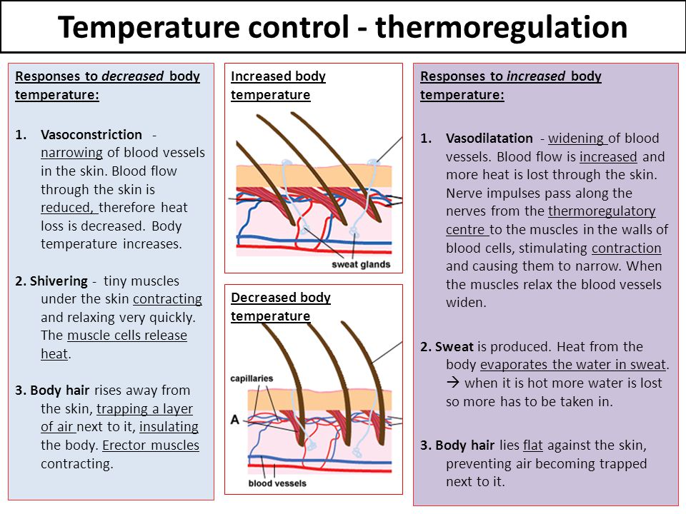 Temperature control - thermoregulation